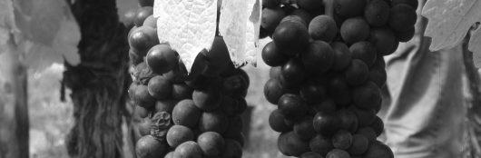 Pinot Noir Lucien Albrecht